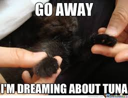 Tuna Sub Meme - tuna dreams by cuteasfuck meme center