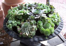 garden cool brown granite bowl succulents containers for small
