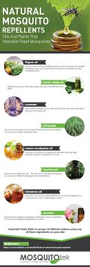 natural mosquito repellents natural mosquito repellents ucollect infographics
