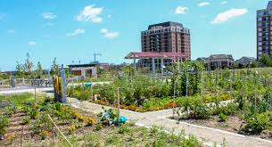 Community Gardens In Urban Areas Community Gardens In Oakville Rob Raham Team Oakville Real