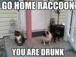 Funny Raccoon Meme - go home raccoon you are drunk party foul raccoon quickmeme