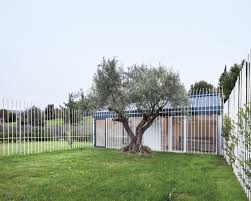 a 200 year old olive tree becomes focal point a guesthouse