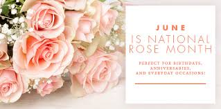 The Month Of June Flower - roses archives bice u0027s florist