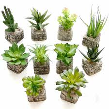 mini plants small potted bonsai mini succulent plants succulents set flower vase