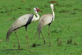 bã ro fã r architektur etiopía cooperación y ornitología viajes solidarios abay etiopía