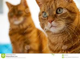 furry twins stock photo image 58948946