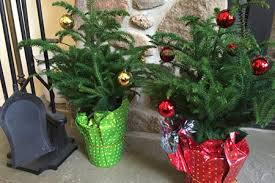 How To Trim A Real Christmas Tree - have a happy north woods holiday costa farms