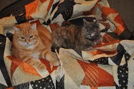 fat cat quilts october 2010