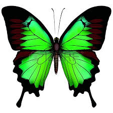 Blue And Green Butterfly - vector illustration of beautiful blue green butterfly isolated