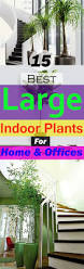 Best Plants For No Sunlight 18 Best Large Indoor Plants Tall Houseplants For Home And