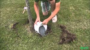 how to fertilize an established plant or tree