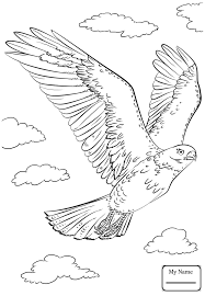 birds funny hawk coloring pages for kids azcoloring club