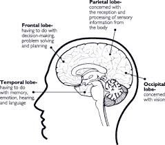 Which Part Of The Brain Consists Of Two Hemispheres Mind Over Matter Sodat Of Nj Inc