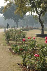 the top 10 things to do near the rock garden of chandigarh