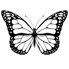 collection of 25 butterfly drawing