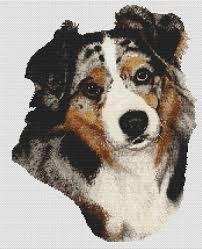 risk n hope australian shepherds dog color pages printable australian shepherd coloring page