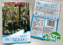 min mix 8 free shipping ornamental millet seeds alias royal
