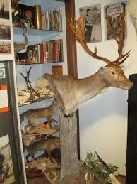 how much space for a hunter u0027s trophy room hunting