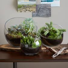 how to make a mother u0027s day terrarium
