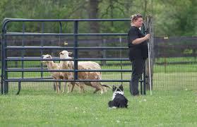 belgian sheepdog nc summer symposium our faculty