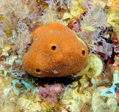 Strawberry Vase Sponge 11 Best Phylum Porifera Images On Pinterest Coral Reefs Ocean