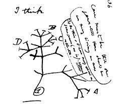 attenborough darwin tree creation com