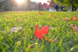 Second Nature Landscaping by Your Fall Lawn Care Maintenance To Do List Second Nature Outdoor