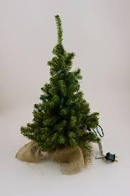remarkable miniature trees searchorld
