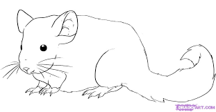 how to draw a chinchilla step by step pets animals free online