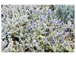 Drought Tolerant Landscaping Ideas Drought Tolerant Landscaping Ideas Southwestern Landscape By
