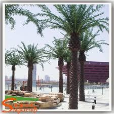decoration wood palm tree names miniature plastic palm tree