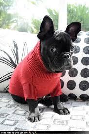 Frowning Dog Meme - turtleneckz r soooo hawt rite nao i has a hotdog dog pictures