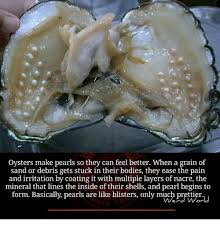 Feel Better Meme - oysters make pearls so they can feel better when a grain of sand or