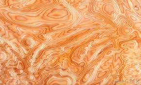 what is burl wood with pictures