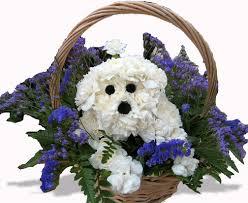 Dog Flower Arrangement San Diego Ca Florist Flowers Flower Delivery La Jolla