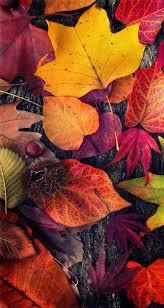 best 25 fall desktop backgrounds ideas on fall