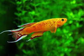 freshwater tropical live stock albany fish farm