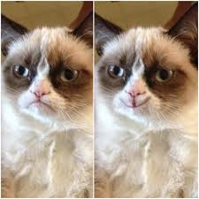 Grump Cat Meme Generator - smiling grumpy cat blank template imgflip