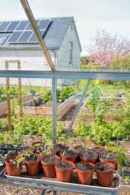 plants growing in greenhouse home vegetable garden sustainable