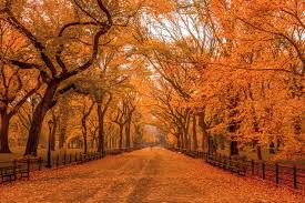 New York nature activities images Best things to do in the fall in nyc including halloween events jpg