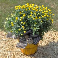 plant delivery downingtown florist flower delivery by blue moon florist