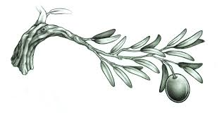 olive branch design by a p t on deviantart