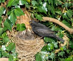 how to identify bird nests country