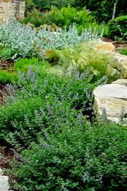 blackfoot native plants blackfoot daisies diana u0027s designs austin
