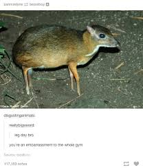 Deer Meme - that is a chevrotain or a mouse deer skipping leg day know your