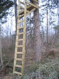 256 best tree stands and blinds images on deer blinds