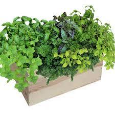 edible indoor plants garden plants u0026 flowers the home depot
