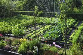 Texas Vegetable Garden Calendar by 9 Vegetable Gardening Mistakes Every Beginner Should Avoid An