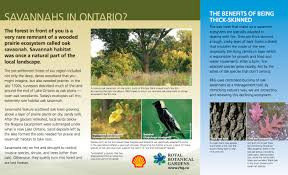 prairie oak ecosystems of the windsor essex nature tours yours to explore