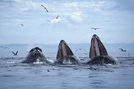 csi for the sea how scientists use dna to spy on whales and find